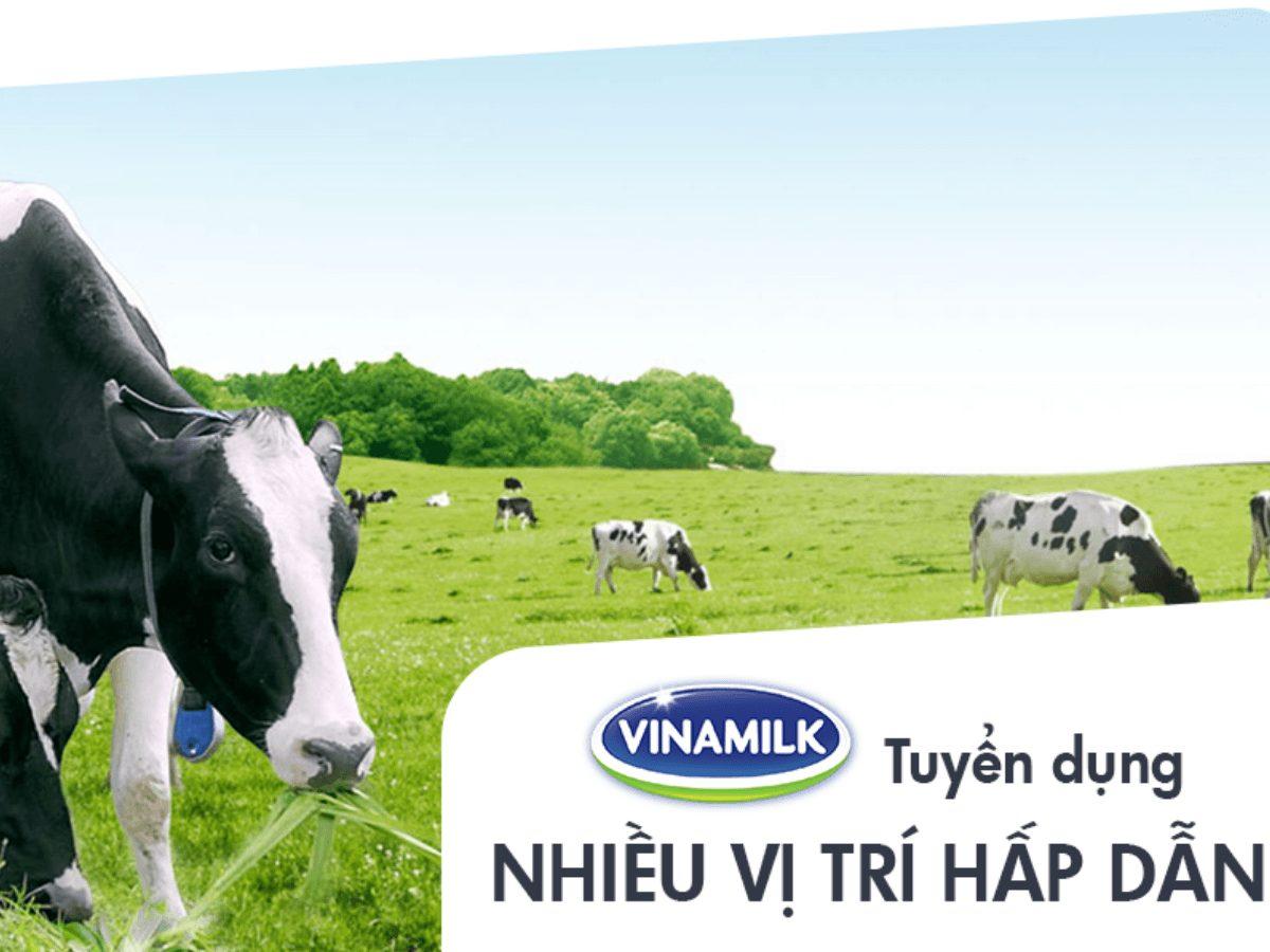 Vinamilk: Những cơ hội việc làm nổi bật dành riêng cho bạn tại Vinamilk