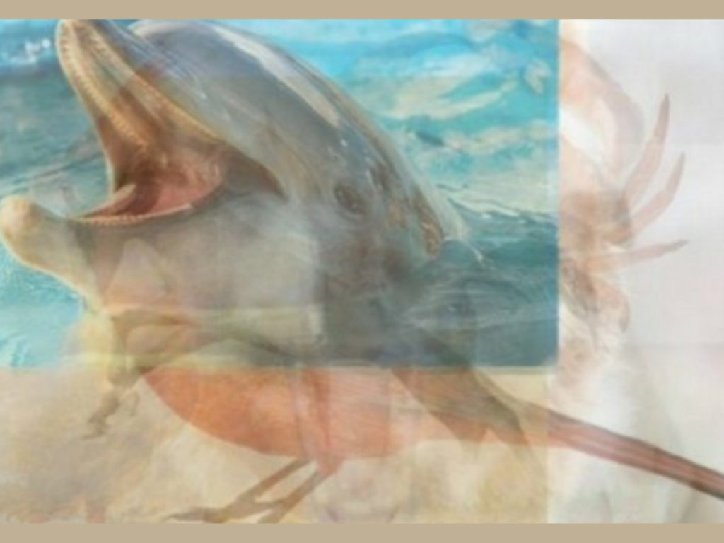 trắc nghiệm hình ảnh - con cá voi