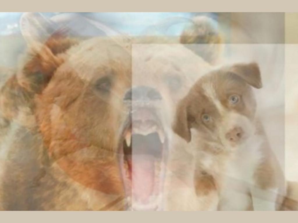 trắc nghiệm hình ảnh - con gấu
