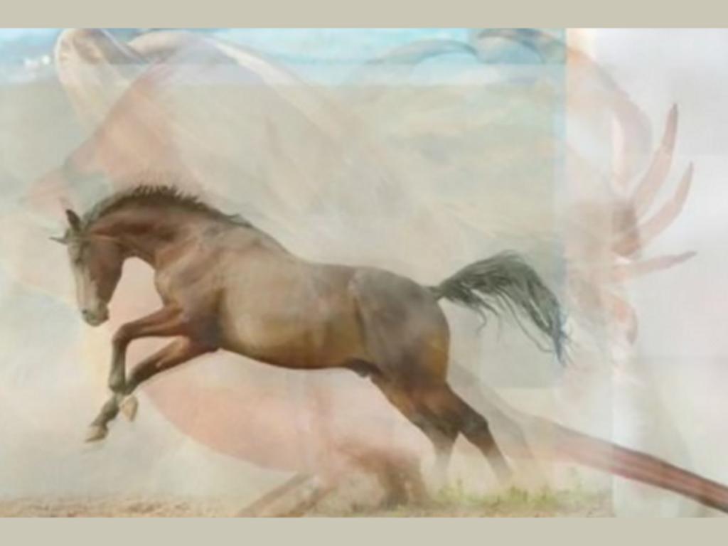 trắc nghiệm hình ảnh - con ngựa
